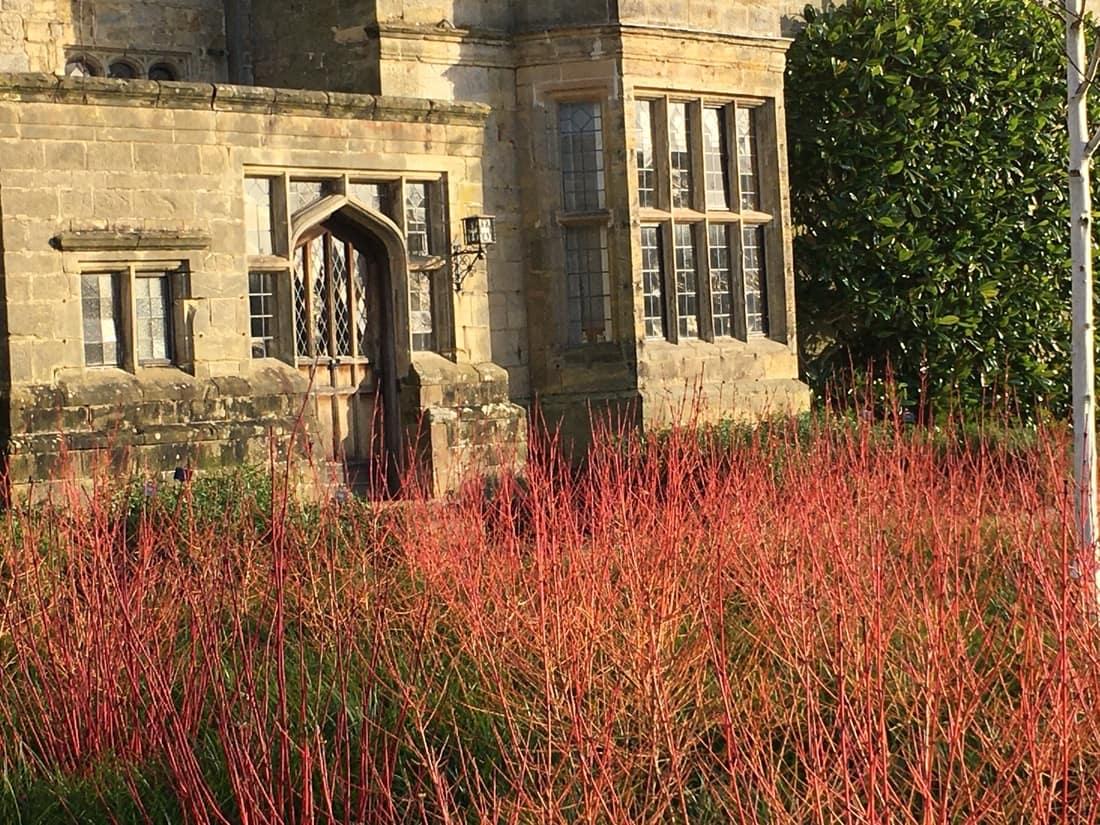 Cornus in a modern garden design
