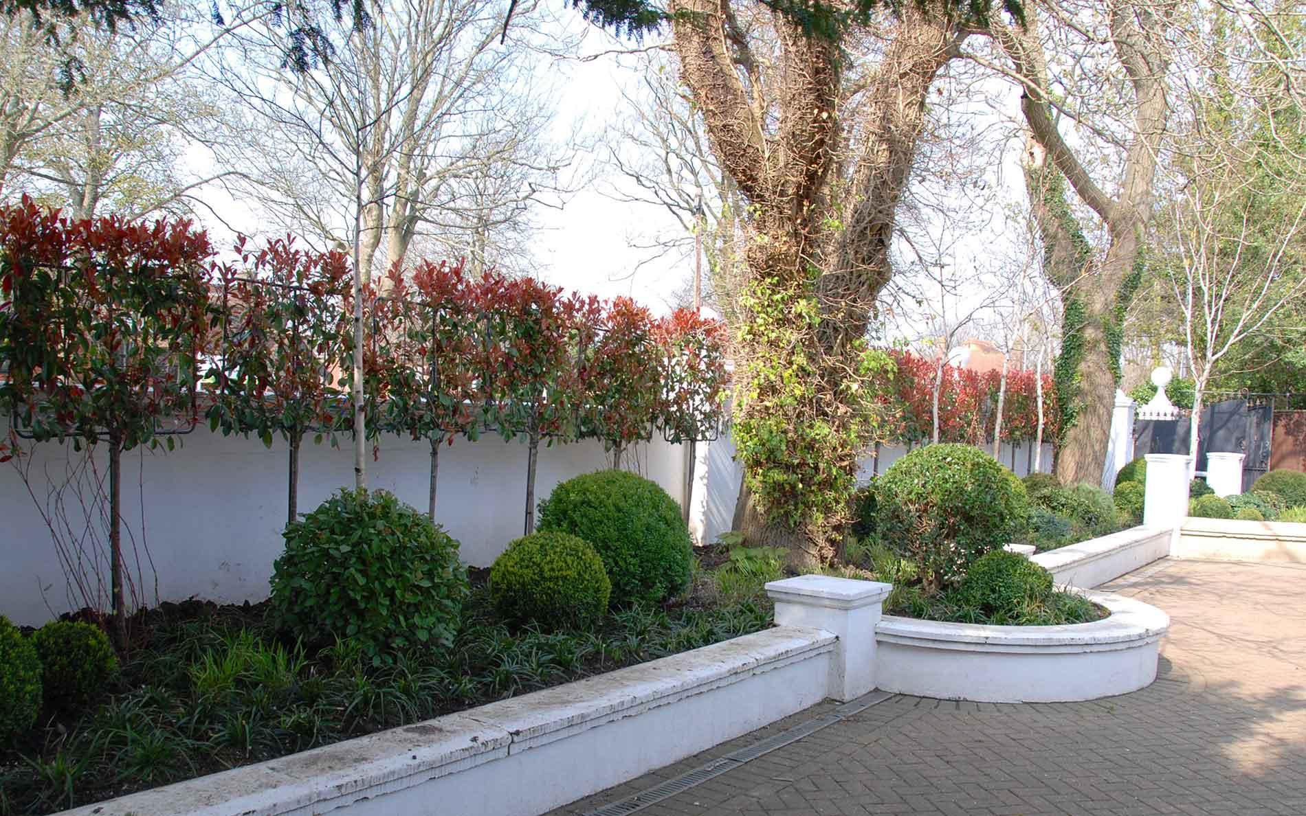 Garden Design Hove - Dyke Road Avenue - Claire Winchester
