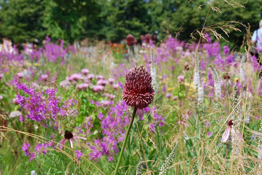 landscape gardener brighton reviews