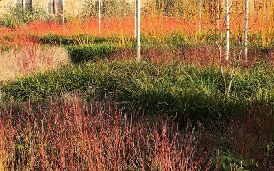 Garden design; planting for winter interest.